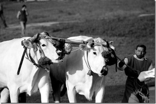 img429_thumb Palio di Sant'Anselmo a Bomarzo, la storia ed il foto racconto feste ideas photo