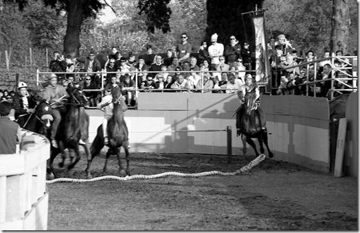 img437_thumb Palio di Sant'Anselmo a Bomarzo, la storia ed il foto racconto feste ideas photo
