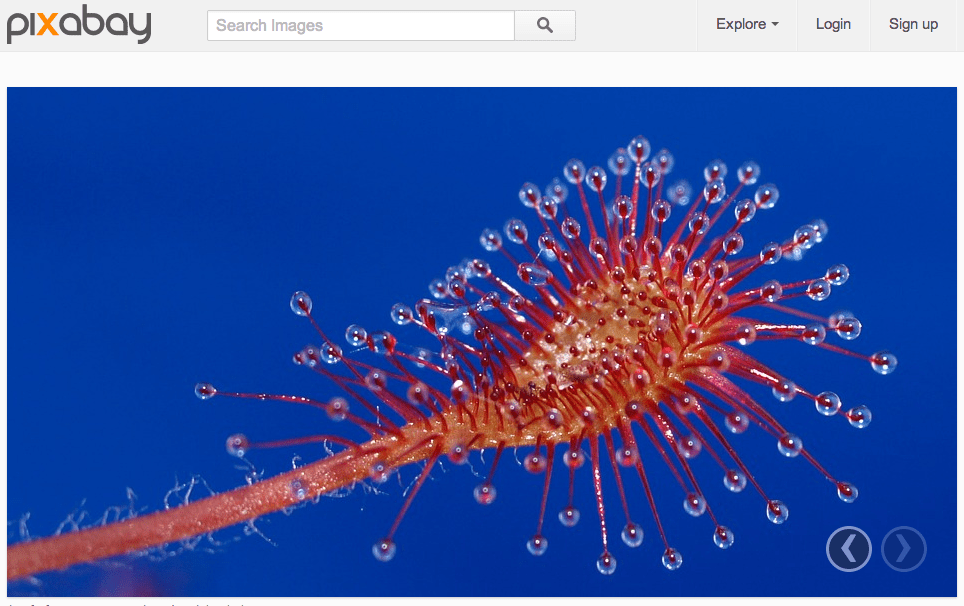 pixabay - I 10 migliori siti dove scaricare immagini gratis per il tuo blog