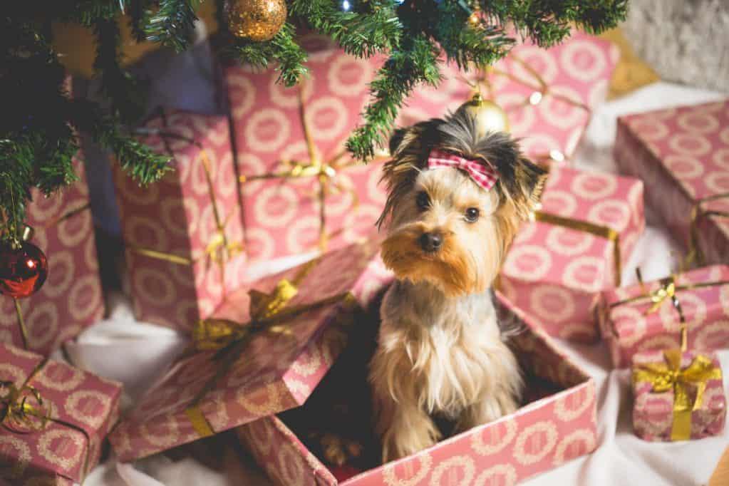 Le migliori idee regalo da uomo che ti salveranno il Natale